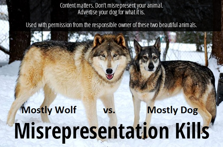 comparison photo of a high content and low content wolfdog explaining the dangers of misrepresenting an animal's wolf content