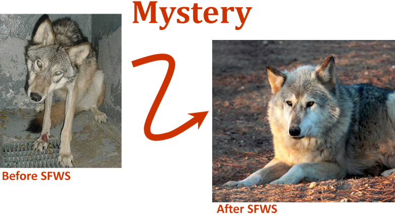Mystery Before After 2
